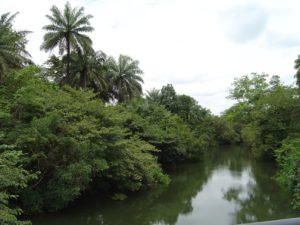 Rivière dans la campagne guinéenne